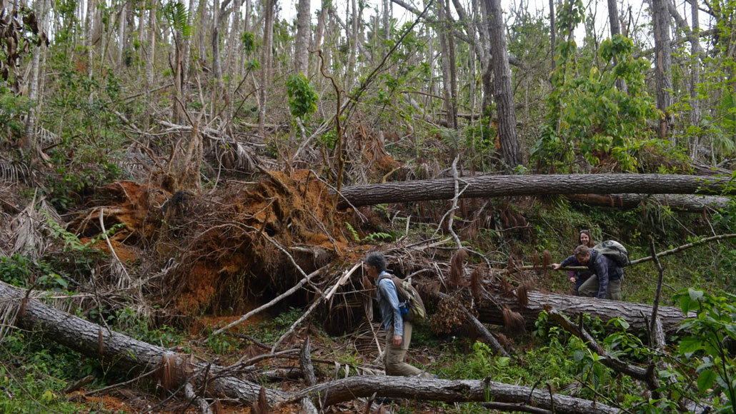 mt hurricane forest damage feat